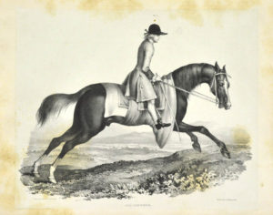 J.. A comparative view of the form and character of the English racer and saddle-horse during the last and present centuries.