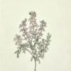 Mrs. [Watercolour Album of Heaths]. - 6