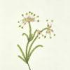 Mrs. [Watercolour Album of Heaths]. - 5